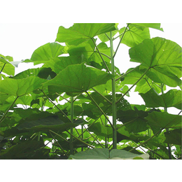 輝煌園林 綠化造景工程 建筑綠化