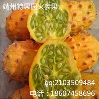 2016稀有水果火参果种子批发