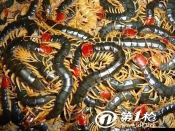 全民飞机大战蜈蚣