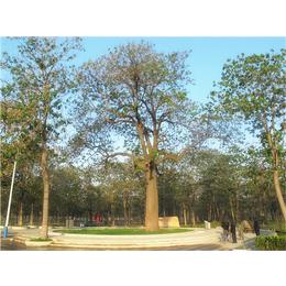 园林造景种植工程