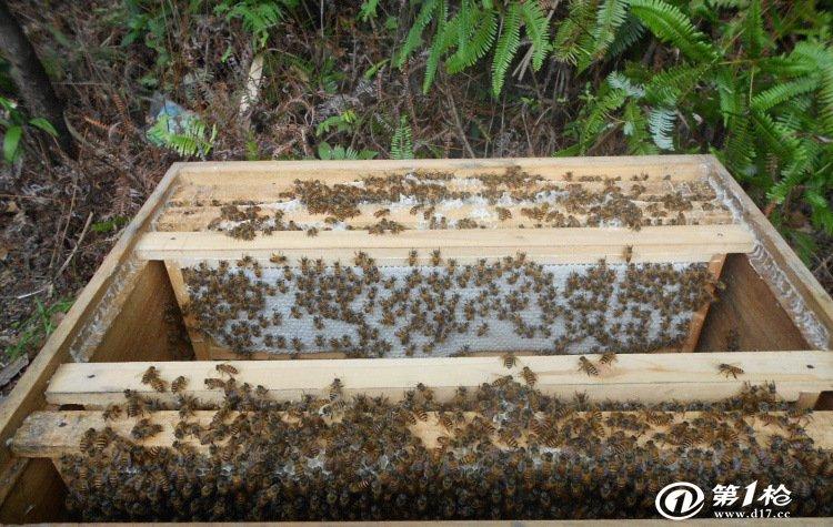 蜜蜂箱子结构图片