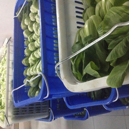 增城单位食堂送菜公司-鼎魁农产品有限公司