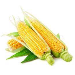 新鲜蔬菜糯玉米批发价格