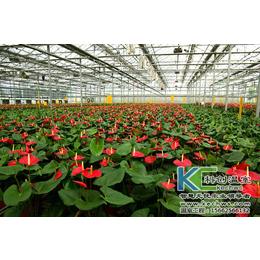 一亩花卉种植温室大棚造价多少钱