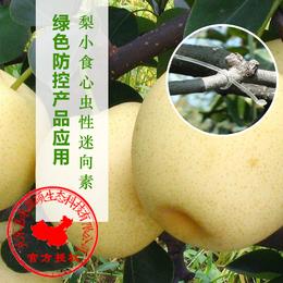 什么是梨小食心虫丨梨小食心虫防治方法丨迷向丝丨嘉禾源硕