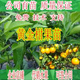 武宣哪里有黄金柑橘苗卖