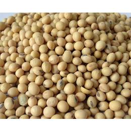 大量优质精选大豆 大豆供应批发