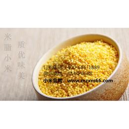 供应2015优质陕北米脂小米 陕北优质杂粮