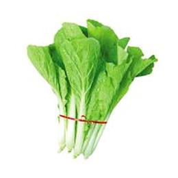 新鲜蔬菜小白菜批发价格