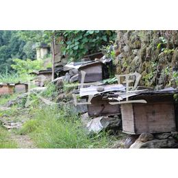 农家土蜂蜜大山野生蜂蜜