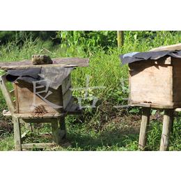 大山野生蜂蜜纯野生冬蜜