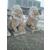石雕动物飞狮雕刻园林大型石狮摆件缩略图1