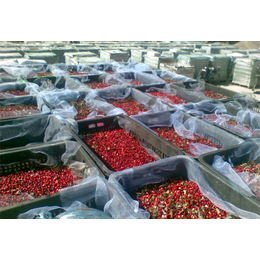 大兴安岭 野生 速冻红豆