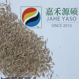 果园锄草丨果园绿肥丨鼠茅草丨北京嘉禾源硕