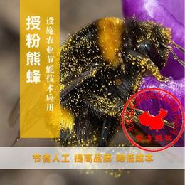 草莓授粉丨熊蜂授粉提高座果率丨熊蜂丨嘉禾源硕