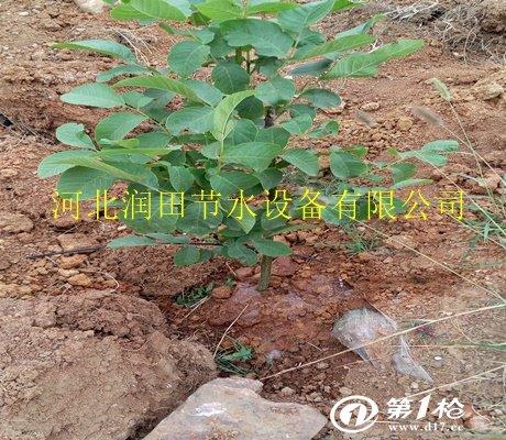 山西忻州市神池县果树滴灌管梨树规格滴灌毛iphone5来电闪膜图片