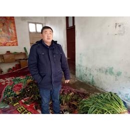 2017新鲜无公害有机蔬菜