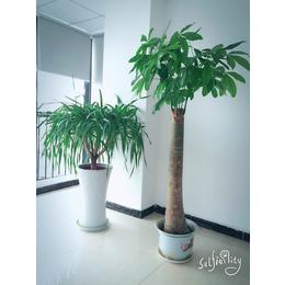 公司环境花卉展示 花卉批发租摆
