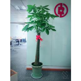 公司盆栽展示案例 花卉批发租摆