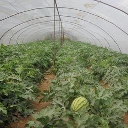 江西西瓜种植专用棚膜