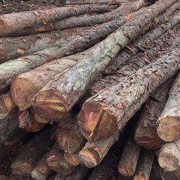 质优价廉专用打桩木建材