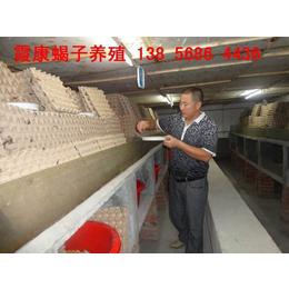 蝎子养殖专业技术滑县蝎子养殖