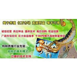 亳州蝎子养殖基地正确的喂养方法