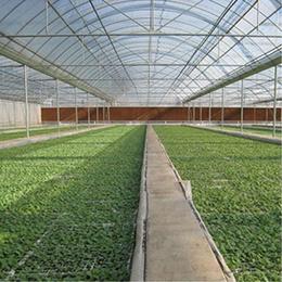 花卉种植专用棚膜