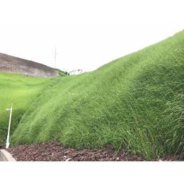 云南昆明护坡绿化客土喷播专用土壤粘合剂