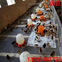 诺克 塑料平网 养鸡网 养鸭网 养鹅网 育雏平网