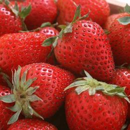 安徽雪坊制冷--上海市草莓保鲜库厂家建设