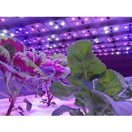 广西植物补光灯哪家好|植物补光灯哪家好|同凯电子