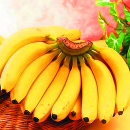 新鲜  香蕉