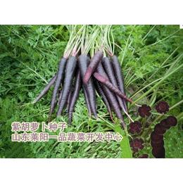 紫胡萝卜种子特色蔬菜种子