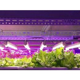 同凯电子(图)、大棚草莓补光灯有用吗、大棚草莓补光灯