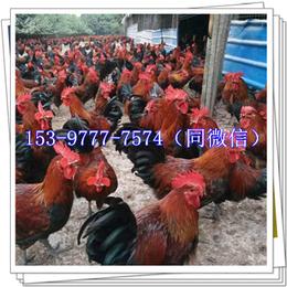 泸州鸡苗多少钱出售水槽
