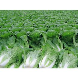 西安蔬菜配送公司,西安蔬菜配送