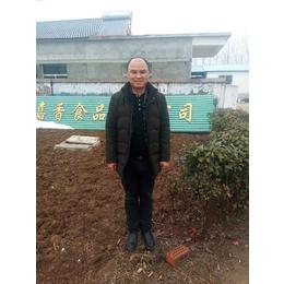供应厂家直销2017新款特卖药材种子