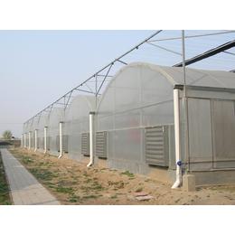 潍坊优质大型连栋式薄膜温室