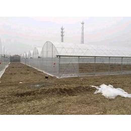 潍坊优质塑料温室大棚