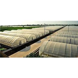 薄膜拱形温室-松原温室-贵贵温室大棚公司