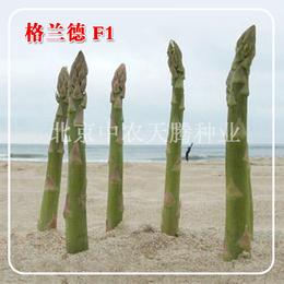 供应进口芦笋种子 格兰德芦笋种子 北京中农天腾种业