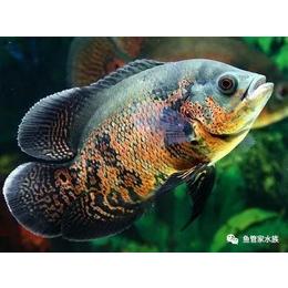济南高新区丁豪广场观赏鱼出租
