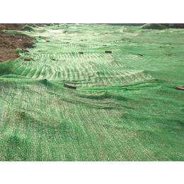 春节过后2针3针4针6针绿色盖土网价格