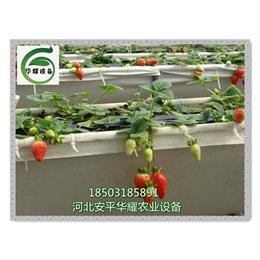 休息度假去温室大棚采摘有机蔬菜水果