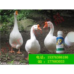 养鸭益生菌雏鸭提高免疫力调节肠道益生菌