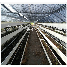 甘肃草莓立体种植槽 无土栽培架 超长使用寿命