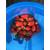 四季草莓苗种植|许昌草莓苗|乾纳瑞农业缩略图1