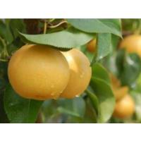 果品包装有学问!分级让你的梨子成为畅销货