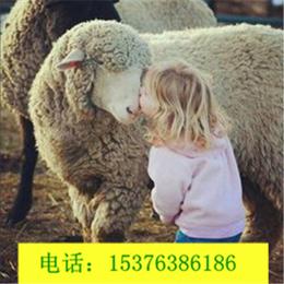 肉羊育肥后期采食量下降怎么办秋季育肥羊益生菌